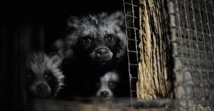 <b>Animals</b> Abused for <b>Fashion</b> - Topics - Campaigns & Topics - FOUR ...