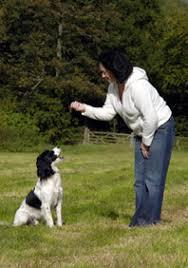 Cómo enseñar a tu perro a sentarse