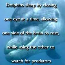 Image result for Dolphins sleep