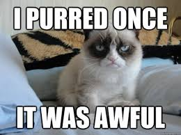 best-funniest-grumpy-cat-5.jpg via Relatably.com