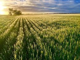 <b>GrainGrowers Carbon</b> Calculator report - <b>GrainGrowers</b>