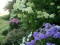 80+ Best <b>Natural Fence</b> ideas | <b>natural fence</b>, <b>fence</b>, outdoor <b>gardens</b>