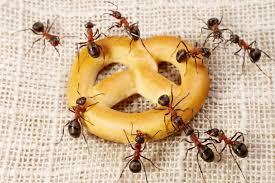 Às formigas