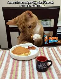 Animal Memes - Cat eating breakfast | FunnyMeme.com via Relatably.com