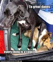 Great Dane Funny on Pinterest | Mantle Great Dane, Great Dane Dogs ... via Relatably.com