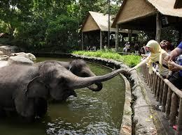 <b>Feed</b> the Animals - Singapore Zoo | Wildlife Reserves Singapore
