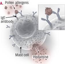 <b>Adult</b> food allergies - Harvard Health