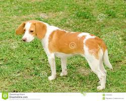 Το δενδρολίβανο είναι καλό για το σκύλο;
