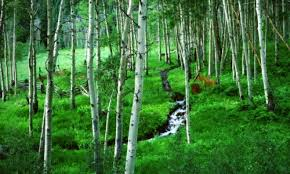 Image result for colorado forests