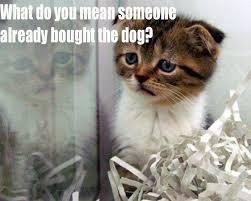 Cute kitten memes on Pinterest | Meme, Kittens and Cat Shaming via Relatably.com