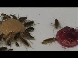 """Масло - """"тараканья"""" смерть? - science - YouTube"""