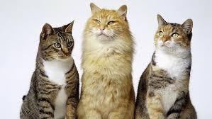 Resultat d'imatges de gatos egipcios historia