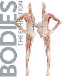 Image result for BODIES…The Exhibition
