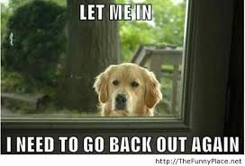 sad dog funny – Funny Pictures, Awesome Pictures, Funny Images and ... via Relatably.com
