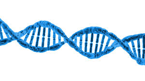 update on genetic engineering using crispr cas technology and update on genetic engineering using crispr cas 9 technology and human embryos