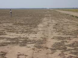 Resultado de imagen para deforestacion argentina
