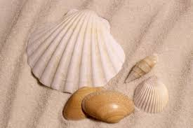 Image result for sea shells sand