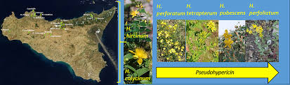 Variability of Hypericins and Hyperforin in Hypericum Species from ...