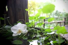 day orchid decor: day spa decor white orchid and cantle in water bowl