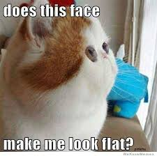 Does This Face Make Me Look Flat | WeKnowMemes via Relatably.com
