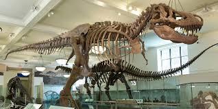 <b>Tyrannosaurus rex</b> Fossil | American Museum of Natural History