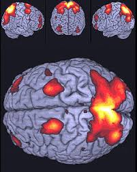Neuroimaging techniques have allowed the detection of the brain cortex regions involved in different processes.