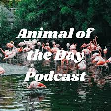 Animal of the Day Podcast