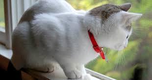 The <b>Cat at</b> the Window
