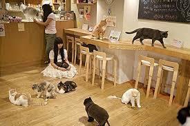 Cat cafe στο Τόκιο...