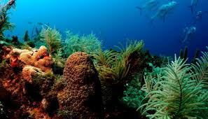 """Результат пошуку зображень за запитом """"картинки про океаны"""""""
