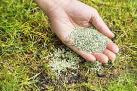 seeded lawn care tips preparing a lawn for seeding and its aftercare