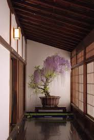 japanese wisteria bonsai add bonsai office interior