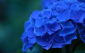 Как пишется <b>синии</b> или <b>синие</b> цветы