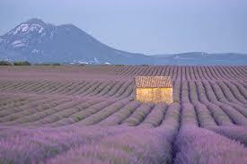 Best <b>Lavender Fields</b> of Provence, <b>France</b> - 2020 Guide!