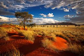 Image result for namibia landscape