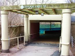 casesblog medical and health blog  this is the african savanna where the hippoquarium is located you can also see the baby elephant and rhinos due to the fact that toledo zoo is actually