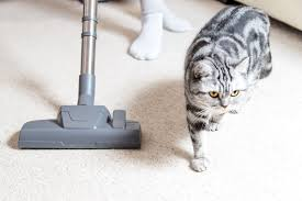 The best vacuum for pet <b>hair</b> 2020 | Real Homes