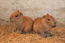 「双子 動物」の画像検索結果