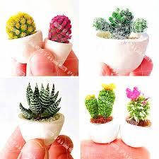 20PCS Bonsai <b>Plant Cactus</b> Rebutia Variety Exotic Flowering Color ...