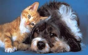 A thread for dog and cat lovers - Page 2 Images?q=tbn:ANd9GcQSh9C81oBUoAYyumFrVje12l0-aD_QtV7-iXoUAyWgSsGa6QH1