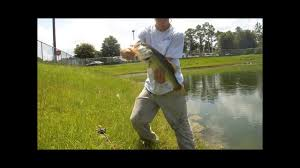 fishing a wal mart retention pond fishing a wal mart retention pond