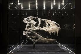<b>Tyrannosaurus rex</b>, facts and photos