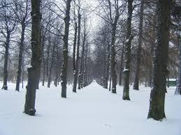خلفيات شتاء خلفيات فصل الشتاء