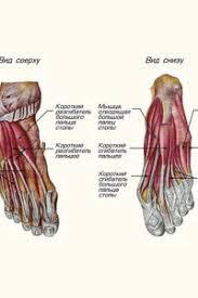 Отделение стопы и <b>бега</b> - лечение плоскостопия и других ...