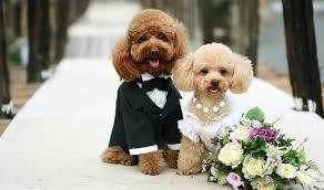 images?q=tbn:ANd9GcQTj-VM2atMm5e-xDF5Ngnbm4ZFRqx3QdwB5uFJDhNCMW7sb1vu Животные на свадьбе: за и против