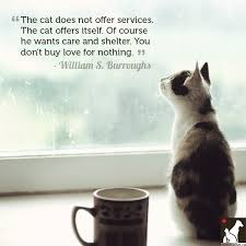 Cat Lover Quotes. QuotesGram