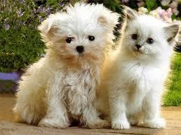 Résultats de recherche d'images pour «animals cute»