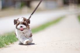 Image result for creative commons puppy pulling leash