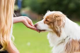 <b>Лакомства для собак</b>. Какие бывают и как выбрать? - Petstory