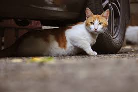 Stray and <b>Feral Cats</b>: How to Help Them
